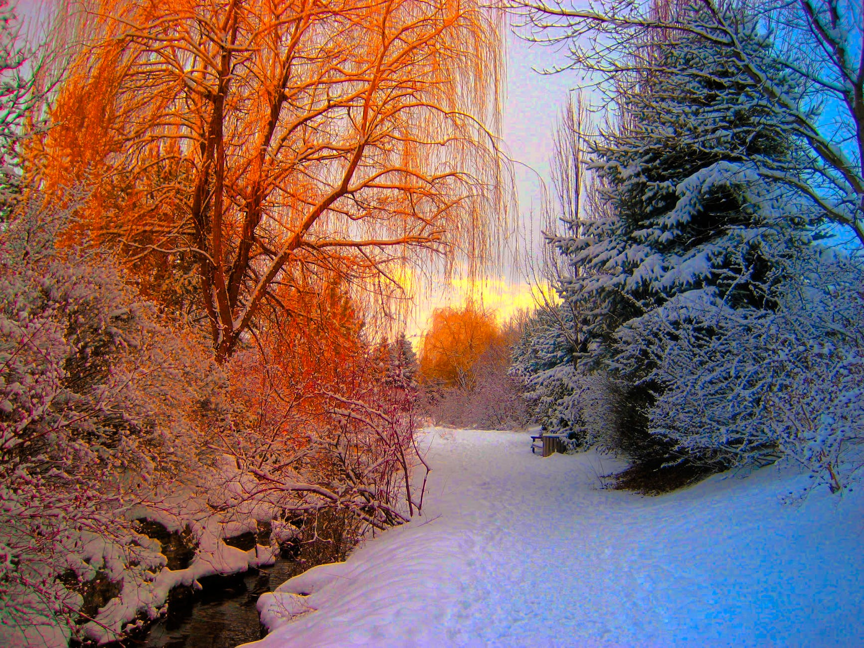 orange and blue and white snow forest