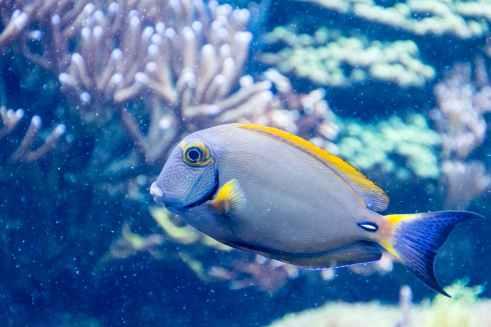 grey and yellow salt fish