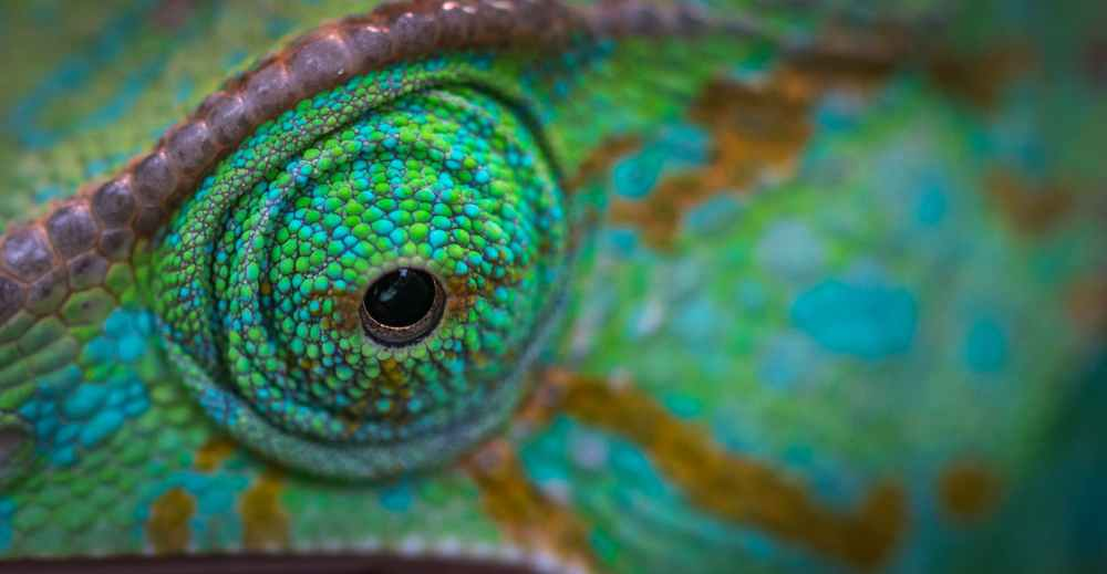 green animal eye