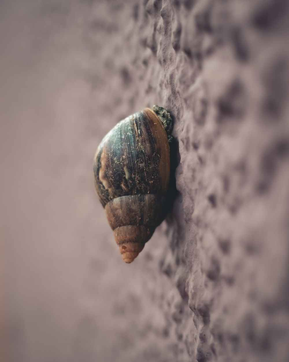 macro photography of snail on grey surface