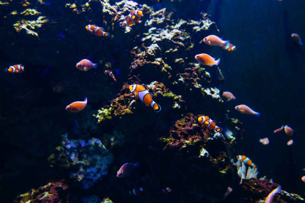 school of fish underwater photography