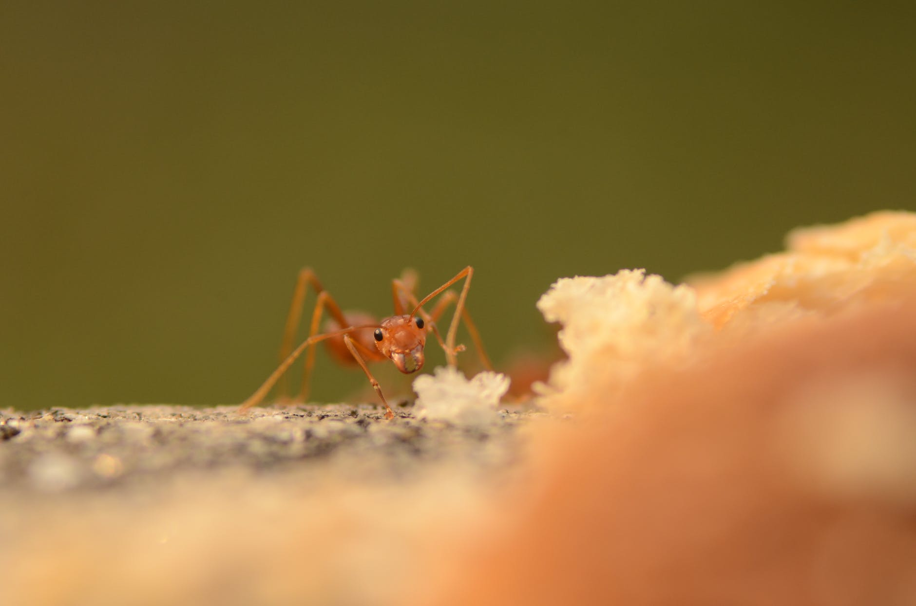 close up shot of an ant